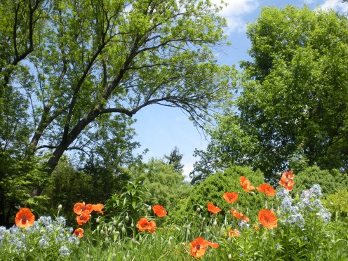 Photo 14 - Another flower garden, that includes orange poppies and blue flowers of some kind.