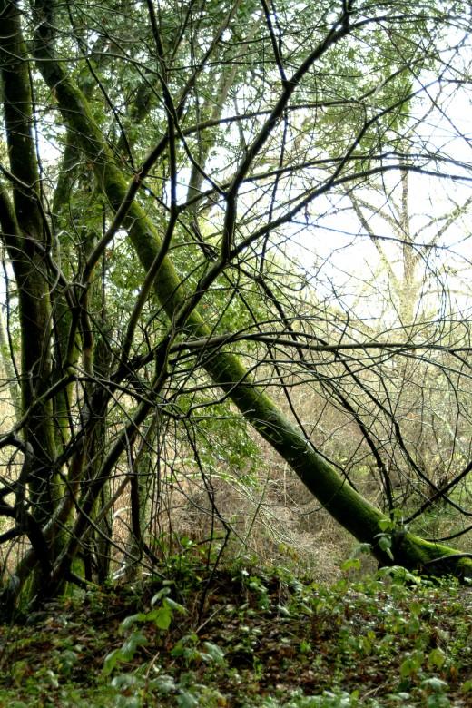 Fallen Moss Forest