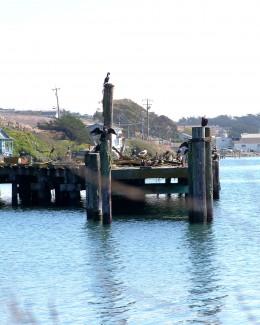 Pier-a-mid Sea Birds