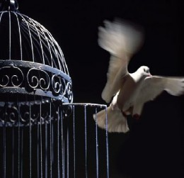http://www.tellthepress.org/wp-content/uploads/2011/09/Caged-Bird.jpg