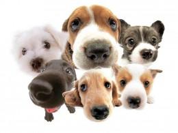So many breeds!  How do you choose?