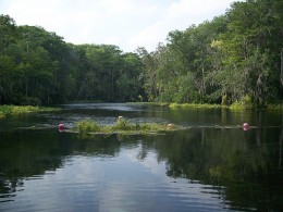 Silver River State Park near Ocala. Home of a colony of rhesus monkey.