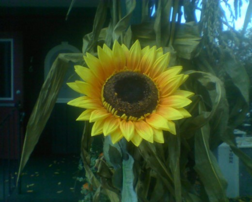 Sunflower on a post downtown North Conway