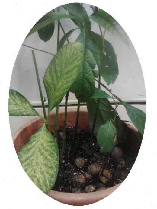 Will plants dry up in a pot without vermiculite?
