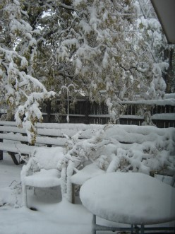 First autumn snow fall of 2011 in Greeley, CO