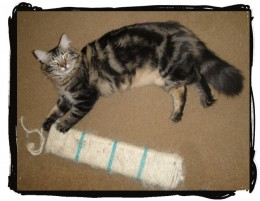 Although a pole is ideal, as a secondary scratcher, even something as simple as this rope wrapped board are loved by cats. This one is one of my cat's favorites. They lay down next to it, grab it and scratch it with their hind legs.