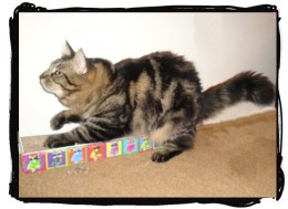 Here's a photo of one of my cats using the cardboard cat scratcher. He loves it!!