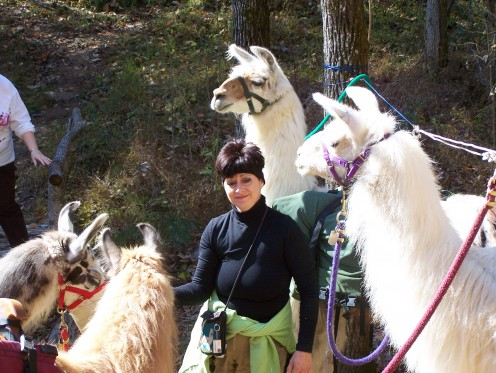 Sandy and her llamas