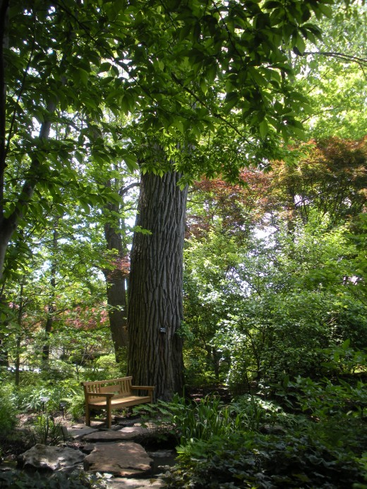Photo 7 - I think this would be a neat idea for a woodland garden.