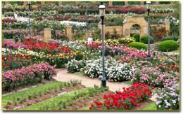 Tyler Municipal Rose Garden