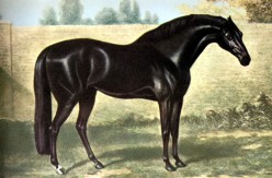 The Foundation Sires of the Thoroughbred Horse