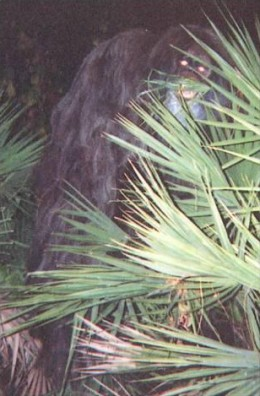 Skunk Ape Photo