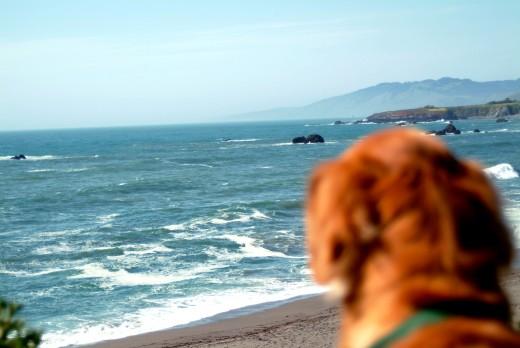 Dog Ocean Vista