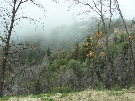 Fog drifting through the parting of the trees up in the San Bernardino Mountains.