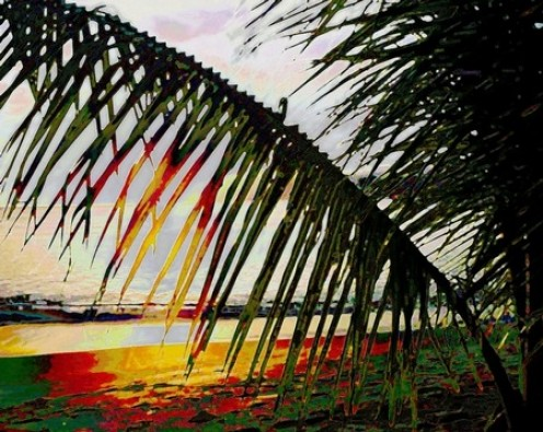 Fronds at the beach. Copyright Ruth Kongaika