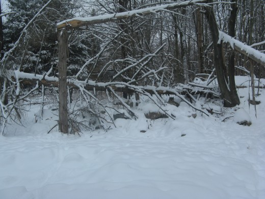 Smith Snow Leopard Encounter - Binder Park Zoo