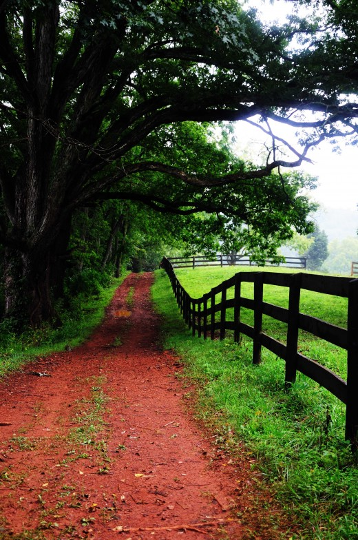 Horse trail at Montpelier, Virginia
