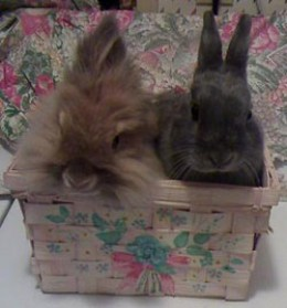 Zeus and Barnaby on Easter.