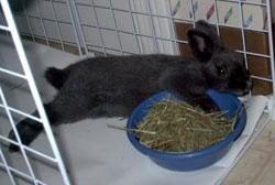 Zeus guarding his bowl of hay!