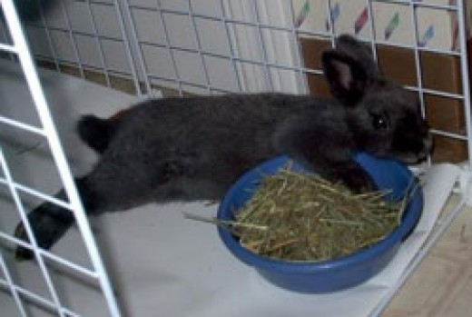 Zeus guarding his bowl of hay!