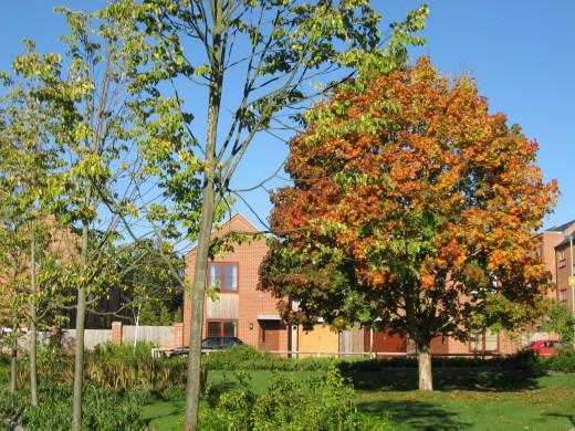 Autumn shows its colours
