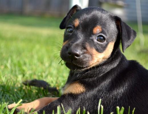 Small Pup,Big Yard