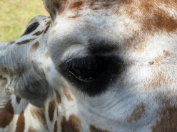 Animals of Binder Park Zoo: A Photo Gallery