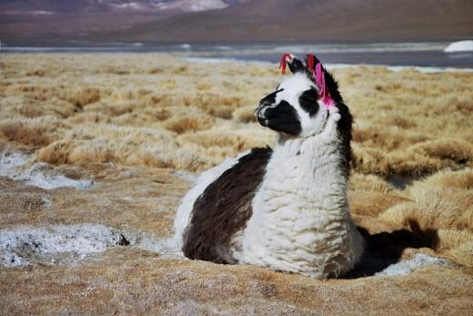 Quite Comfortable - Bolivia
