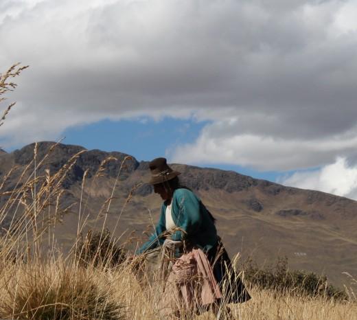 Working Lady - Peru