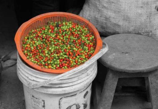 Chilis in Peru