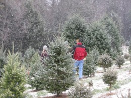 Photo taken while Christmas tree hunting at a local tree farm.