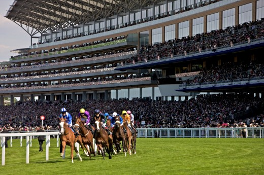 Horses and jockeys come around the bend in front of the stands at Ascot race course