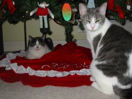 Dixie on the left, Misty on the right, notice that the unbreakable Christmas ornaments are on the bottom of the tree? Always a wise idea!