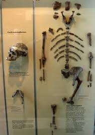Bones of what is thought to be our ancestors