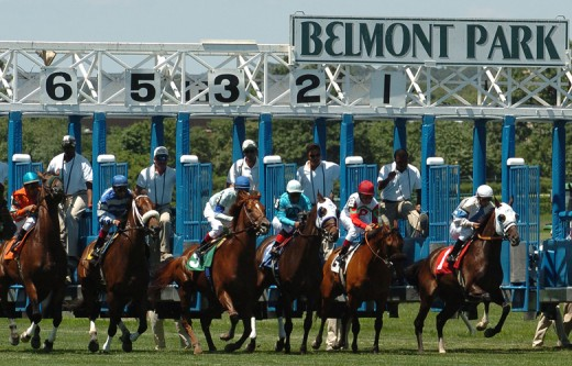 And they're off: The starting gate at Belmont Park