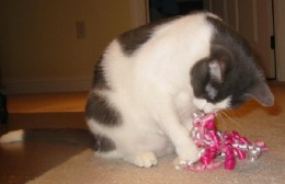 What a TREAT! Dixie got to play with curly ribbon on her first birthday, but then mean mommy took it away! ;) (For her own safety!)  :)