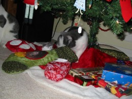 """Ooooh look! A stocking just for ME! :) Dixie is taking a """"peek"""""""