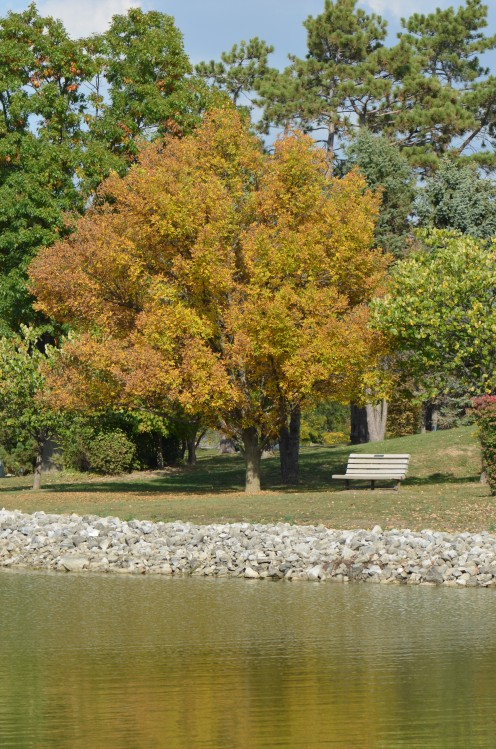 Photo 3  - This pond is located in Chesterfield, Missouri, and I love the tree turning to Fall colors here.
