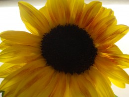 This flower represents the bright hope and possibility shown at the end of this poem.