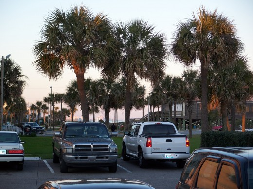 PARKING LOT AND TREES CO-EXIST AT MYRTLE BEACH