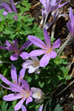 Photo 7 - Gorgeous purple flowers growing close to the ground.