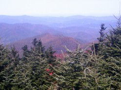 Blue Ridge Mountain Beauty