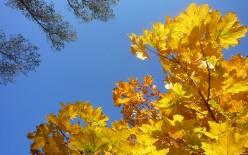 Golden leaves over the desert