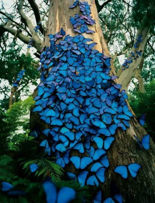 Would that I could create such beauty as these beautiful butterflies.