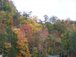 An autumn view between work and home