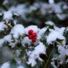 Adding Winter Interest to Your Garden