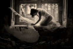 Broken Wing - A Poem