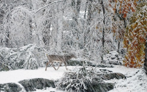 A deer in the snow.