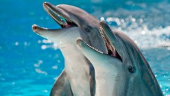 how do whales and dolphins communicate