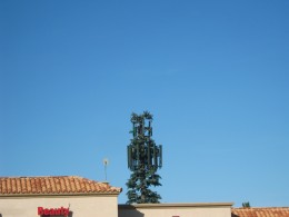 Cell phone tower disguised to look like a pine tree!